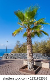 Embankment in the small village of Alcala.  Tree in focus, Tenerife. Canary Islands. Spain