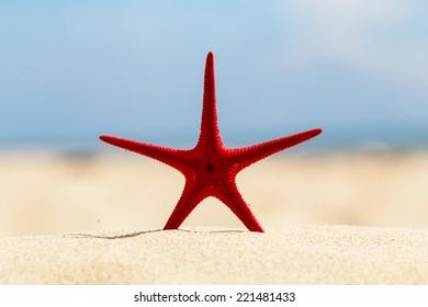 Embed starfish on sand beach