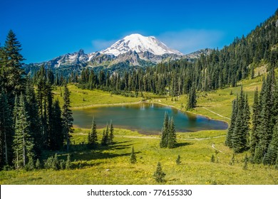 Emblazoned on every Washington license plate and visible throughout much of the western state, Mt Rainier is the contiguous USA's fifth-highest peak - Chinook Pass, Mount Rainier National Park, WA