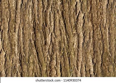 Embossed texture of the bark. Panoramic photo texture.