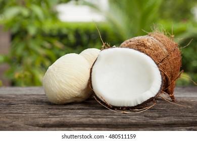 embryo bud of a coconut tree