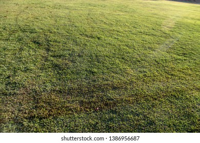 Emerald grass, the texture of a green lawn, the full sun, emerald green color, sturdy, easily rooted, ideal for residential gardens, playgrounds and sports fields