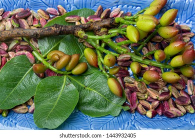 Emerald green pistachios nuts and pistachio tree branch from Bronte, located on slopes of Mt. Etna, Sicily, Italy, regional product