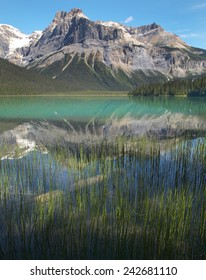 Emerald lake landscape. British Columbia. Canada. Vertical