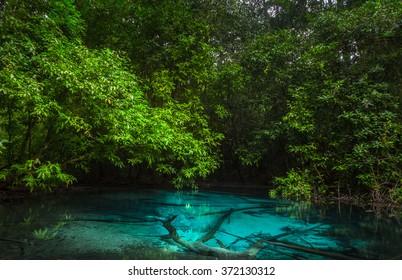 Emerald pool (Sra Morakot) in the jungle. Krabi province of Thailand