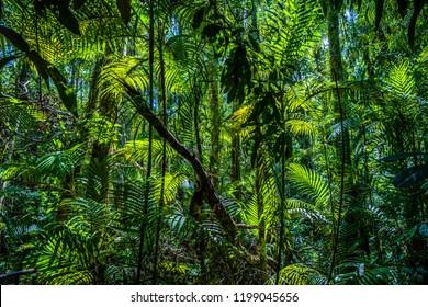 Emerald Pool, Yosemite National Park, Krabi, Thailand, Lush green foliage in asian tropical jungle