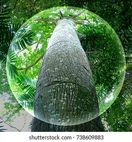 The emergent layer of a rainforest is very sunny and only the tallest trees can reach this layer. Kapok tree (Ceiba pentandra) shown here is one example. A fisheye view on its tall and massive trunk.