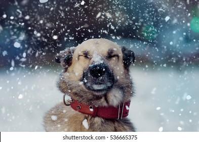 Emotionen, Hund unter Schnee