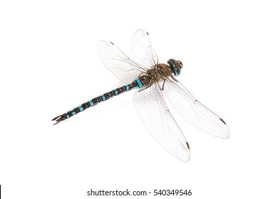 Emperor Dragonfly on white background