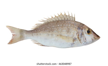 Emperor fish isolated on white background