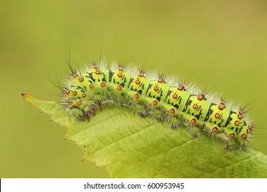 Caterpillar Images Stock Photos Vectors Shutterstock