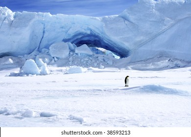 Emperor penguin (Aptenodytes forsteri) standing next to an ice cave on the sea ice of Antarctica