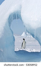Emperor penguin (Aptenodytes forsteri) standing on the ice in the Weddell Sea, Antarctica