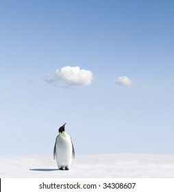 Emperor Penguin checking the weather