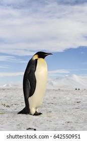 Emperor Penguin colony at Snow Hill in  Antarctica.