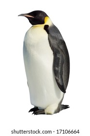 Emperor penguin isolated against a white background