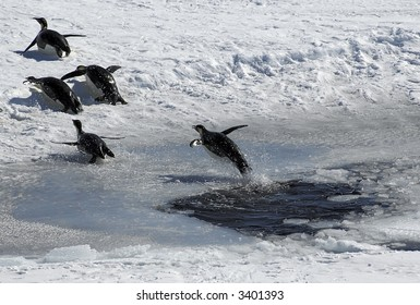 Emperor penguin jumping out of an ice hole and following a group of four penguins. Picture was taken near the tip of the Peninsula during a 3-month Antarctic research expedition.