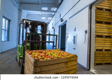 The employee on the electric forklift carry the container wiht ripe apples to inside a fridge airless storage camera. Production facilities of grading, packing and storage of crops of large warehouse.
