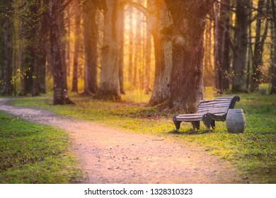 Emplty curved sand forest path at sunset or sunrise. Trees and bench on sides of road.