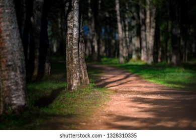 Emplty curved sand forest path at sunset or sunrise. Trees on sides of road.