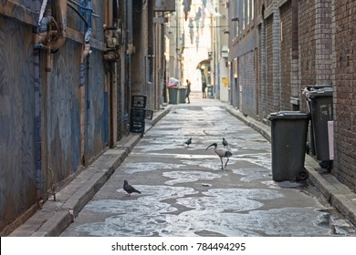 Empty Alley with a birds in an urban. looking down an empty inner city alleyway