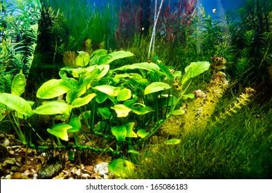 empty aquarium with a lot of algaes