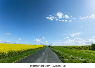 Empty asphalt country road passing through green and flowering agricultural fields. Countryside landscape on a sunny spring day in France. Environment friendly farming, industrial agriculture concept