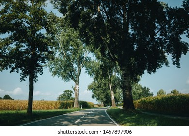 Empty asphalt road amidst high lush trees and fields in countryside area