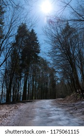 The empty asphalt road in the forest late at night