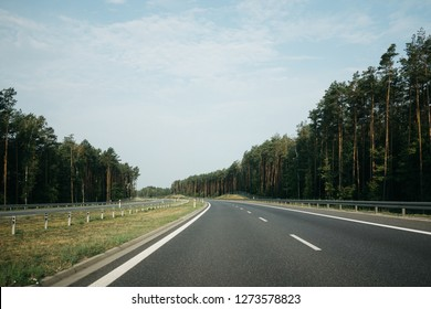 Empty asphalt road and green pine forest on the side in sunny summer day