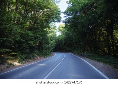 Empty asphalt road surrounded by deciduous summer forest