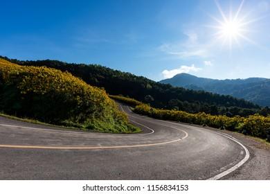 Empty asphalt road through Mexican sunflower flower field