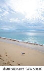 empty beach cabo san lucas seagull footprints sea of cortez mexico cloudy
