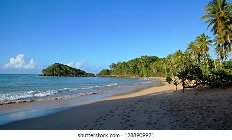 Empty beach with palms, Playa Bonita Beach, Dominican Republic, Samana peninsula
