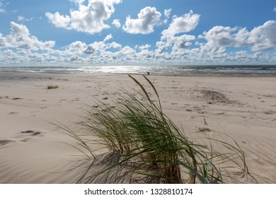 Empty beach under blue cloudy sky with grass bunch in foreground, Palanga, Lithuania, Europe