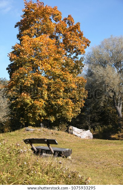 Astounding Empty Bench Autumn Park Near Tall Stock Photo Edit Now Onthecornerstone Fun Painted Chair Ideas Images Onthecornerstoneorg