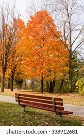 Empty Bench and Autumn Tree