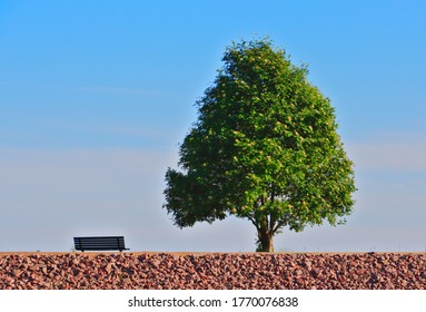 An empty bench and green tree on the beach against blue sky.