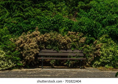 Empty bench in the park in the seaside resort, resting place, green park, sunny day, vacation