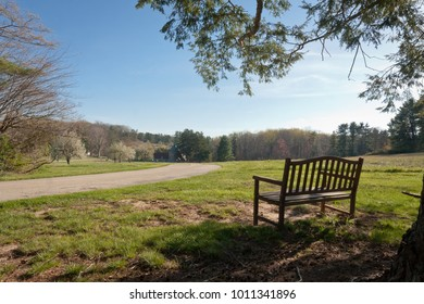 Empty Bench Watches Over Spring Emerging