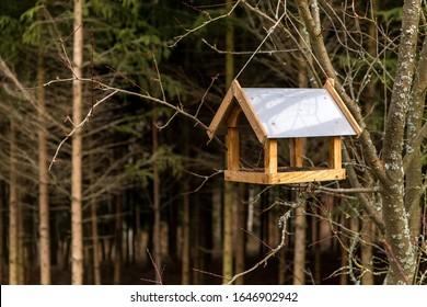 Empty bird feeder on tree near forest. Blurred background. Feeding birds. Helping animals.