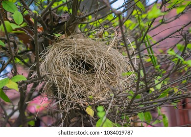 Empty bird nest in my garden. Bird's Nest features narrow entrance found with bird in South East Asia. Nest made from dry grass. Birds will nest of hay piece by piece.