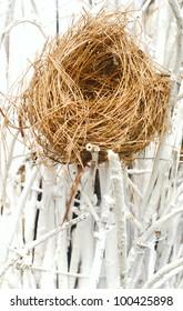 empty bird nest  with white branches