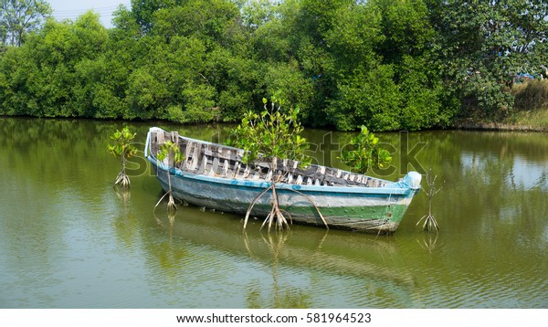 The empty boat in the mangrove forest