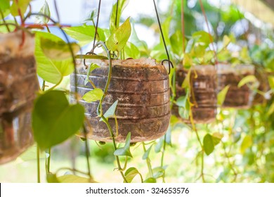 Empty bottles used as plant pots. a recycling efforts