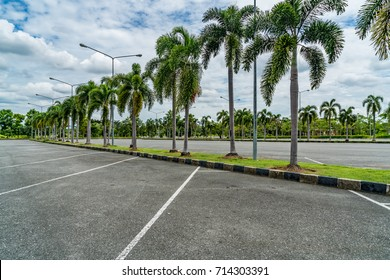 Empty car park with green palm trees and blue sky background