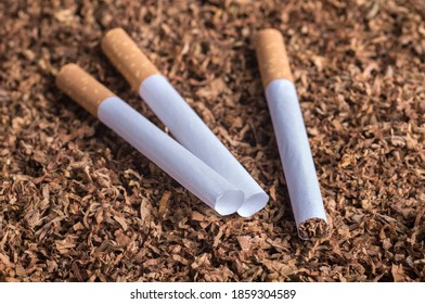 empty cartridges with a filter for filling with tobacco, cigarettes lie on tobacco leaves