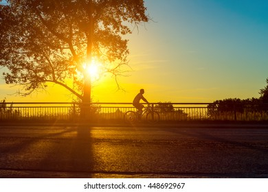 Empty city road with rider silhouette at summer sunset. Silhouette and shadow of tree in the city park at sunset. Background with copy space area and golden colors.