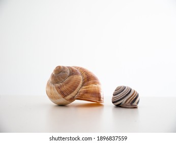 Empty common snail shell houses isolated on white close up macro shot.