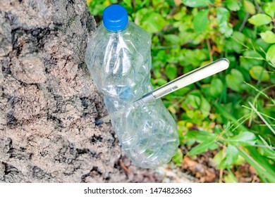 Empty compressed plastic bottle nailed to a tree with a knife